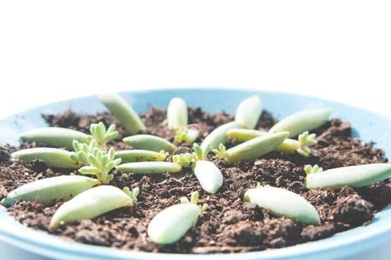Succulent propagation for beginners sublime succulents for How much sunlight do succulents need