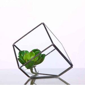 glass cube terrarium