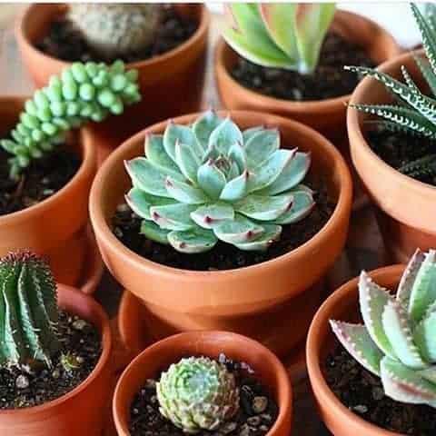 7 Best Places to Buy Succulents Online