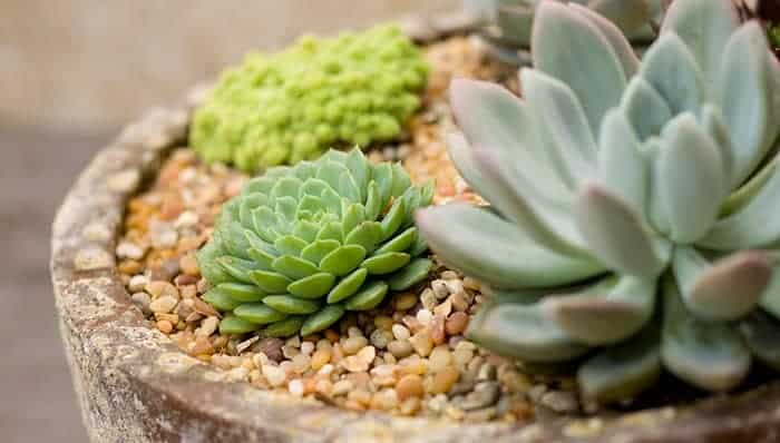 6 Great Succulent Sites
