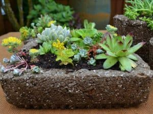 great succulent sites