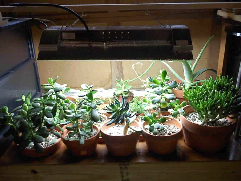 What Kind Of Grow Light Do I Need For Succulents