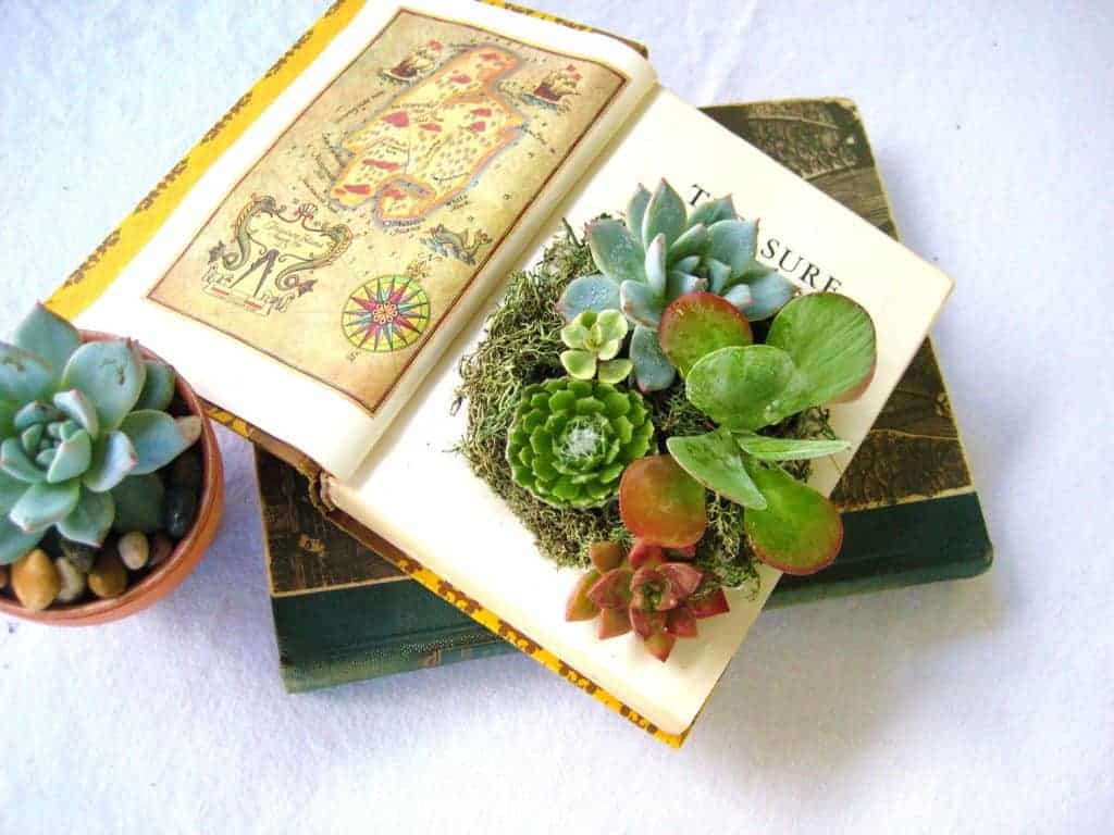 12 Must Have Succulent Books