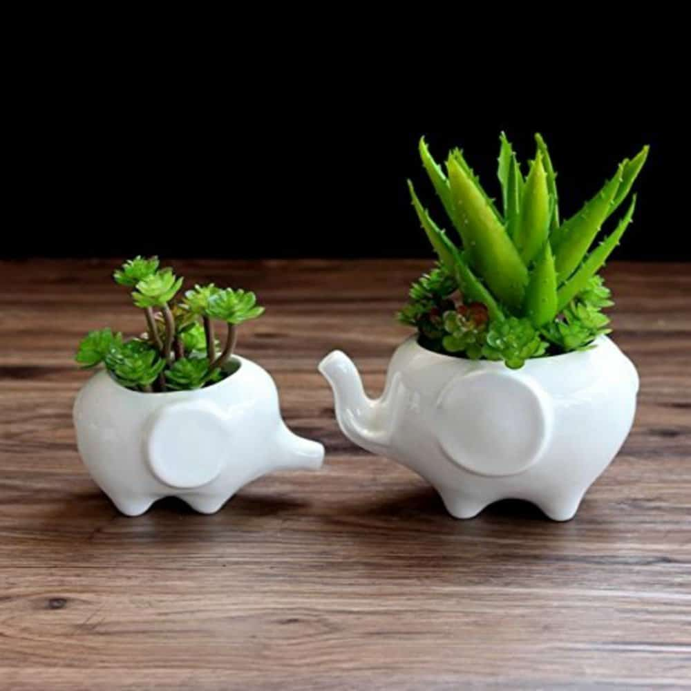 succulent gift guide