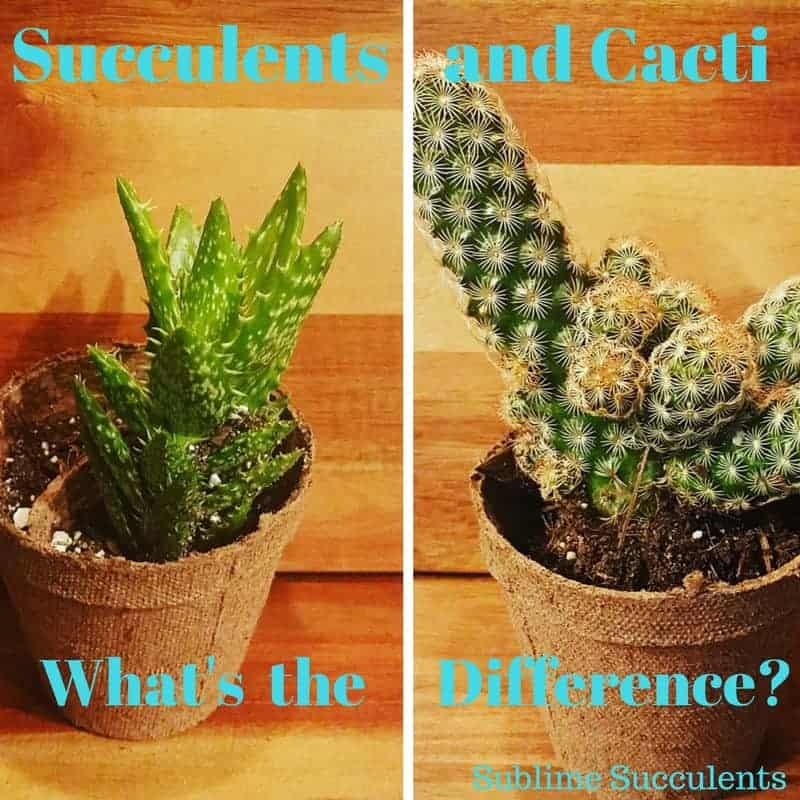 What's the Difference Between Cacti and Succulents