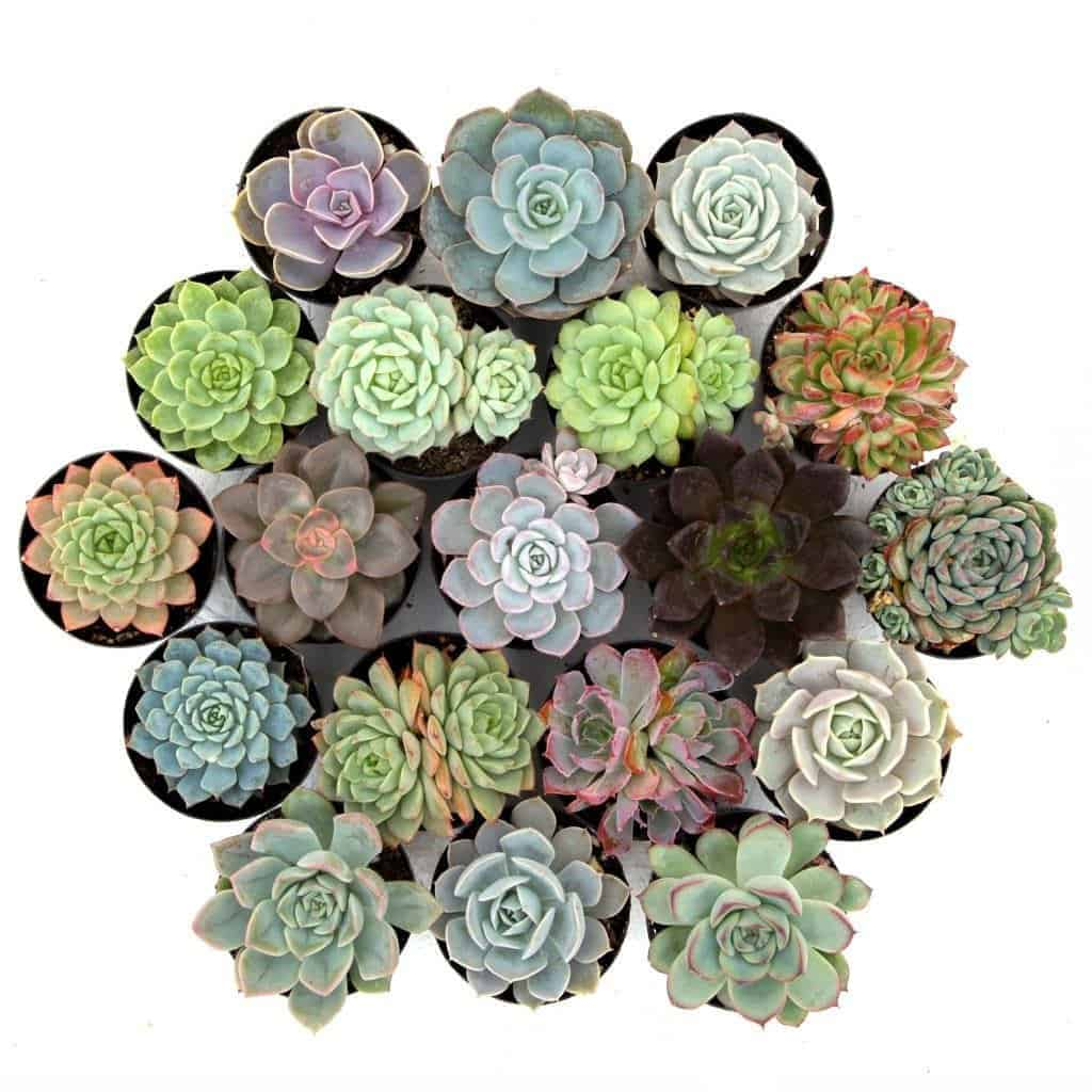 best succulent arrangement