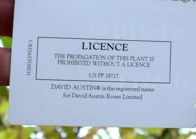 patents and trademarks on succulents