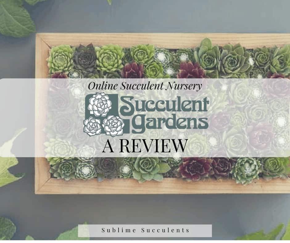Succulent Gardens Online Succulent Nursery Review Sublime Succulents