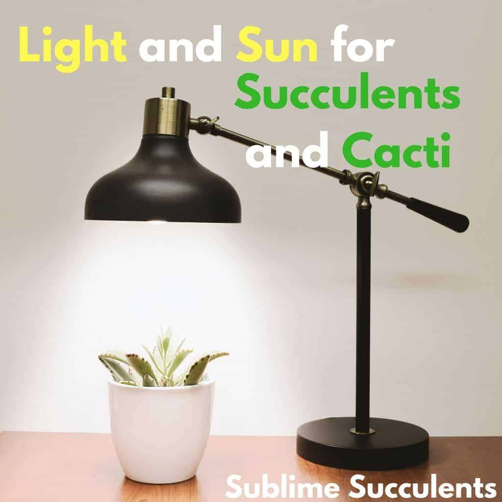 Light And Sun For Succulents And Cacti The Ultimate Guide