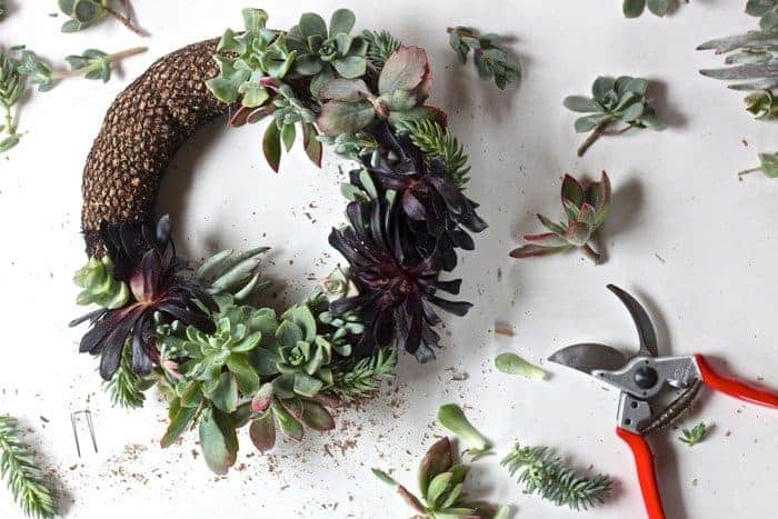 bulk succulents diy