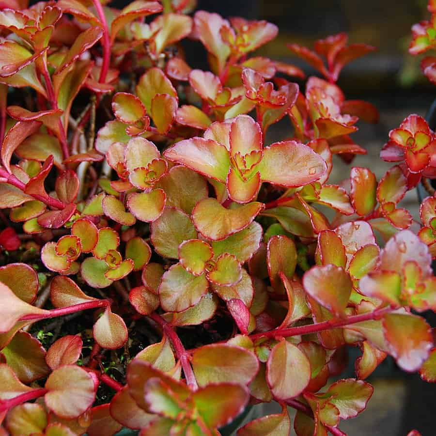 best cold hardy plants