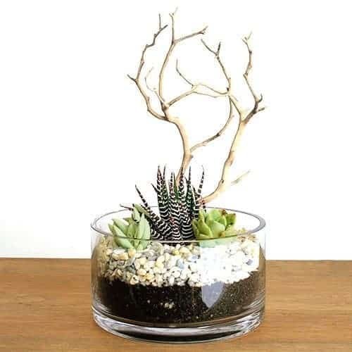 5 ways killing succulents