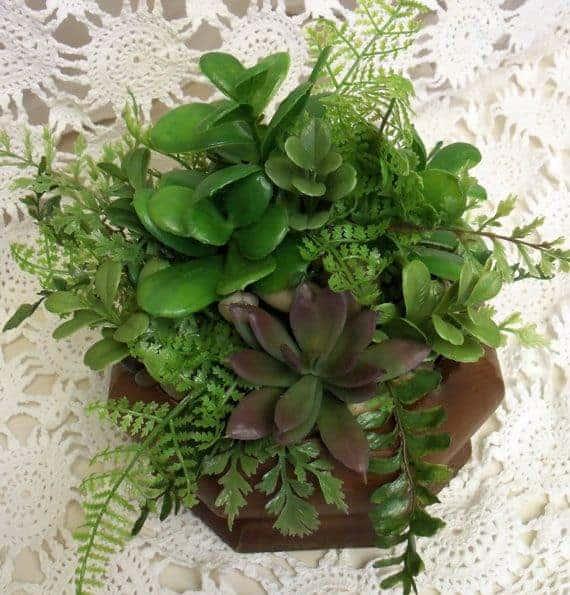 5 ways killing succulents