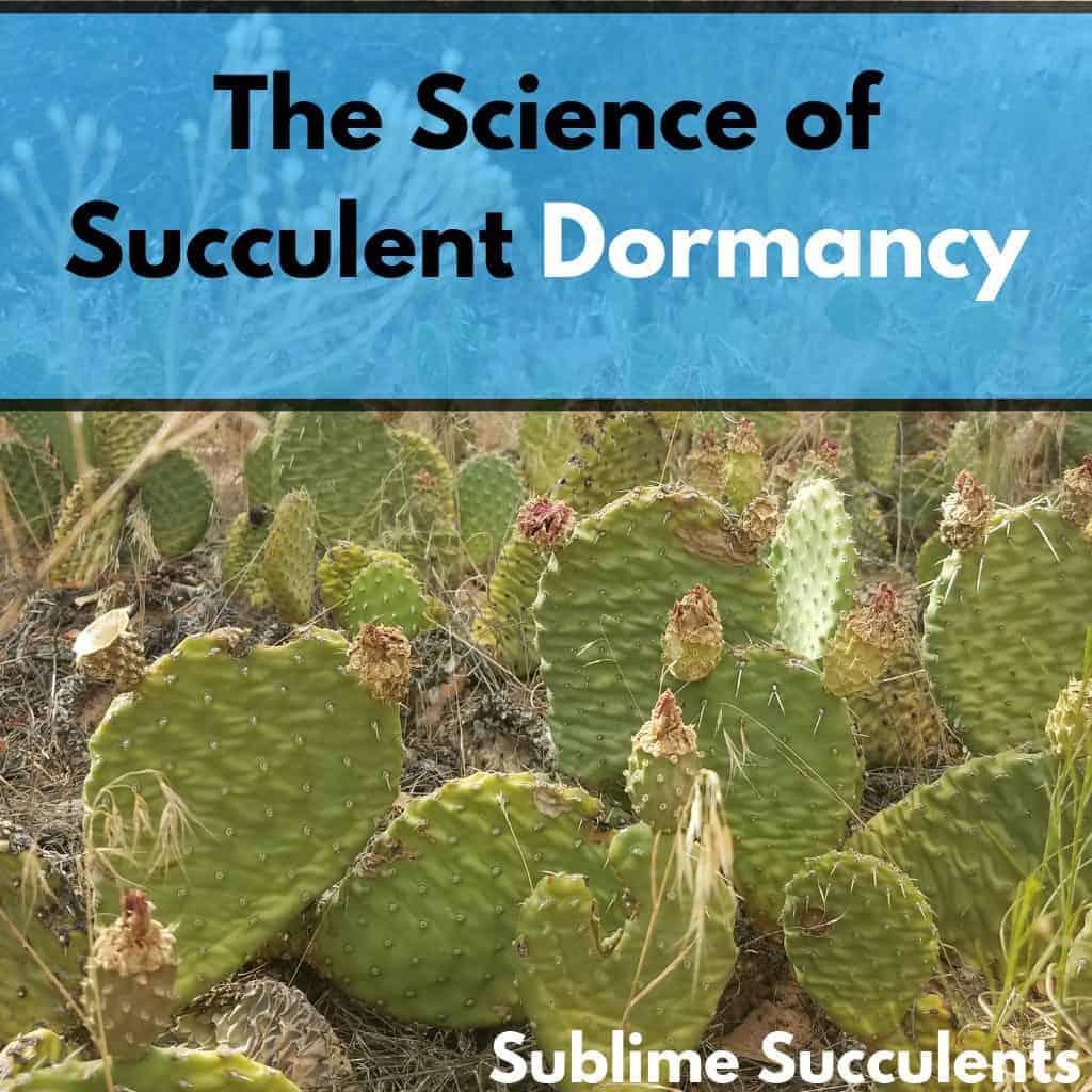 Succulent Dormancy