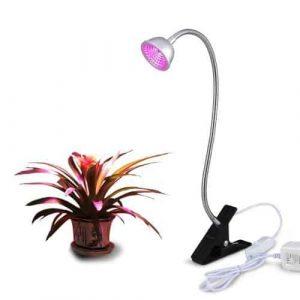 succulent grow lights