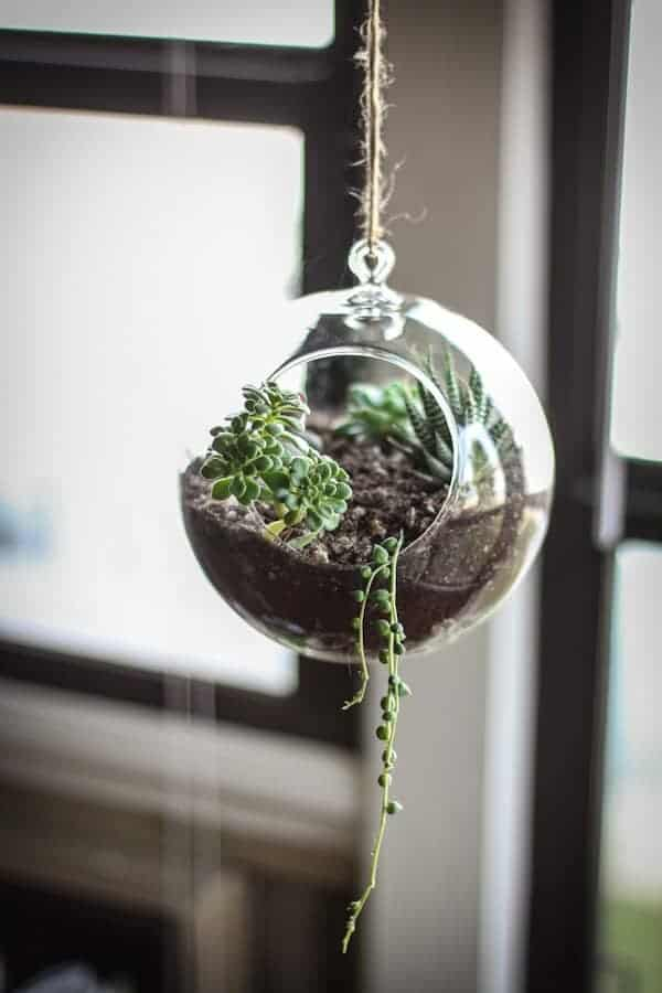 dont make a succulent terrarium