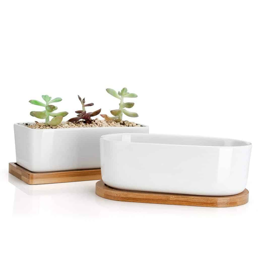 succulent pot size