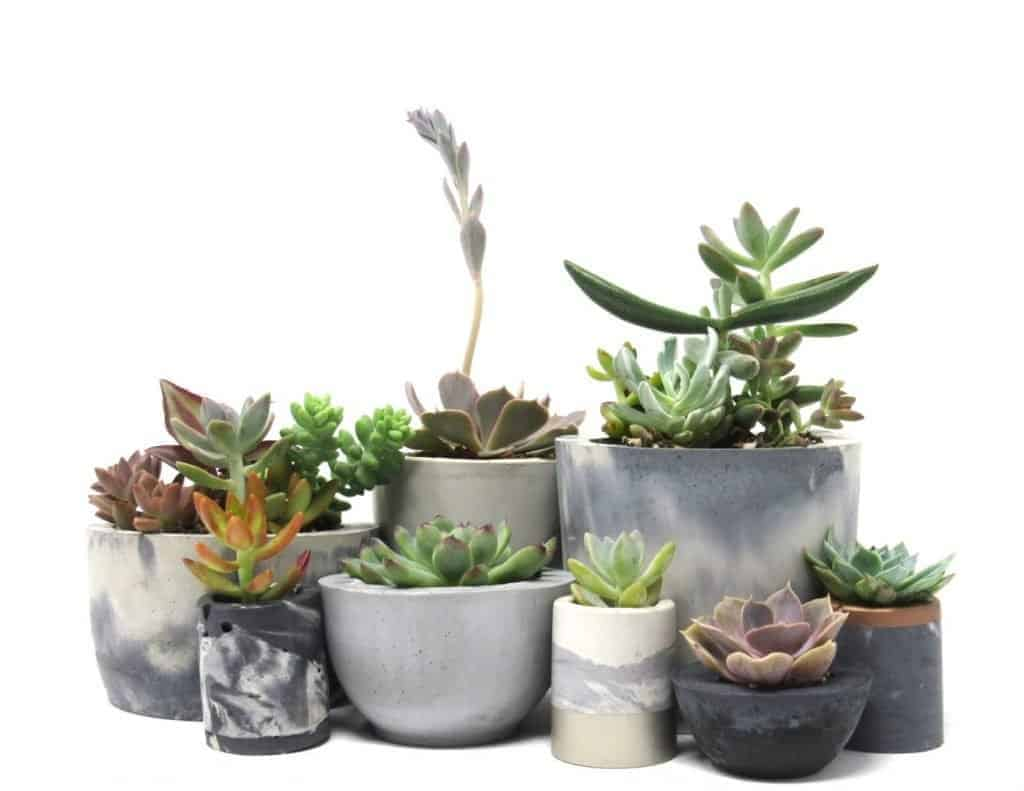How to Choose the Correct Pot Size for Your Plant