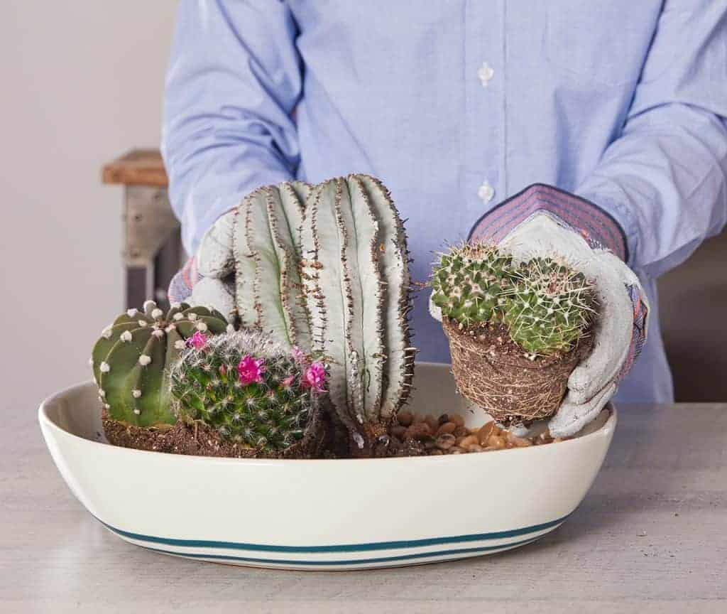 How to Handle Cacti Safely