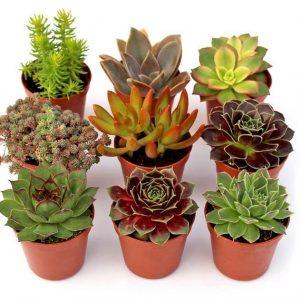 Terracotta vs  Plastic Pots for Succulents | Sublime Succulents