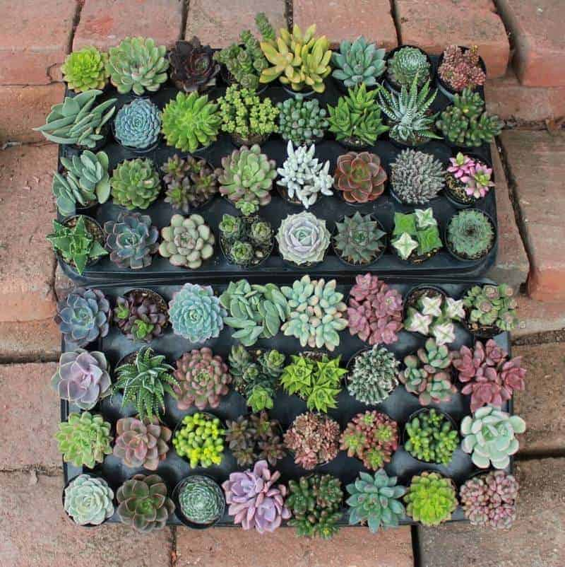 The Succulent Source