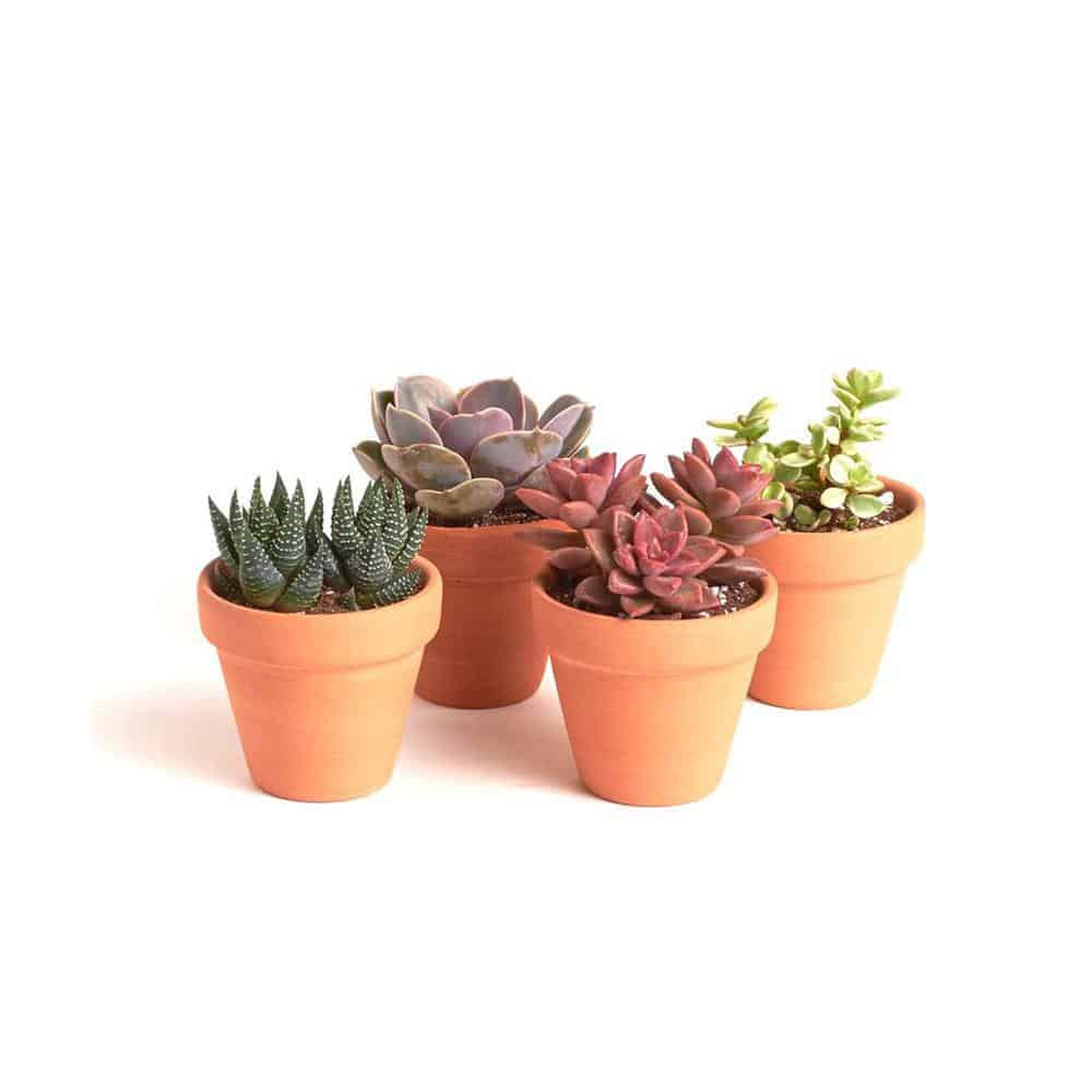 Terracotta vs. Plastic Pots for Succulents