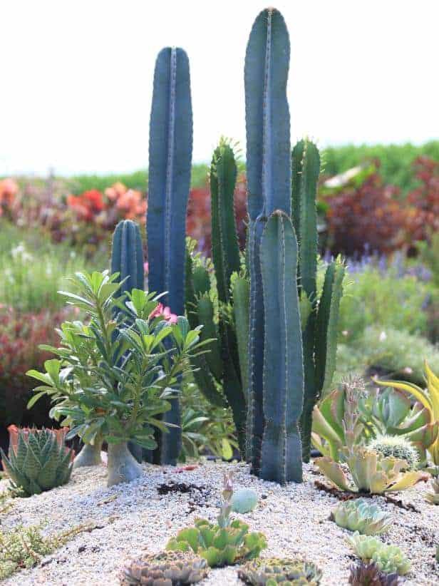 Arizona For Succulent And Cacti