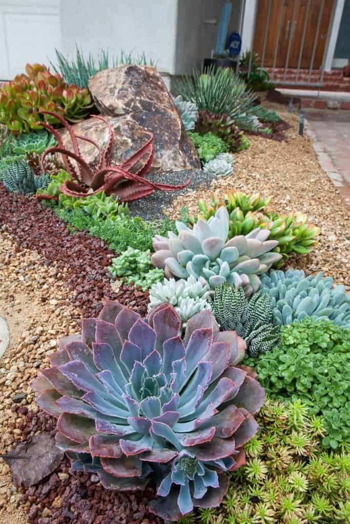 Be Planted In The Ground Or Pots