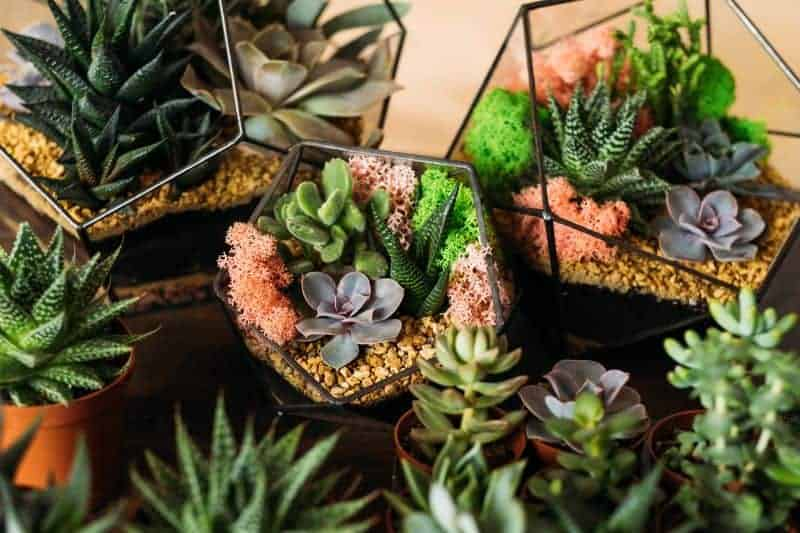 How to Care for Indoor Succulents