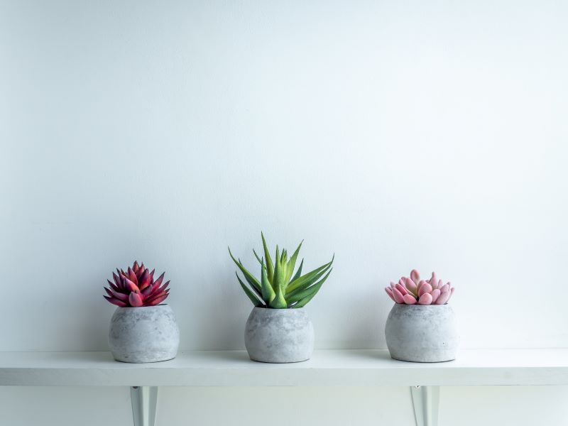 How to Keep Succulent Plants Small