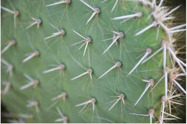 How to Remove Cactus Needles